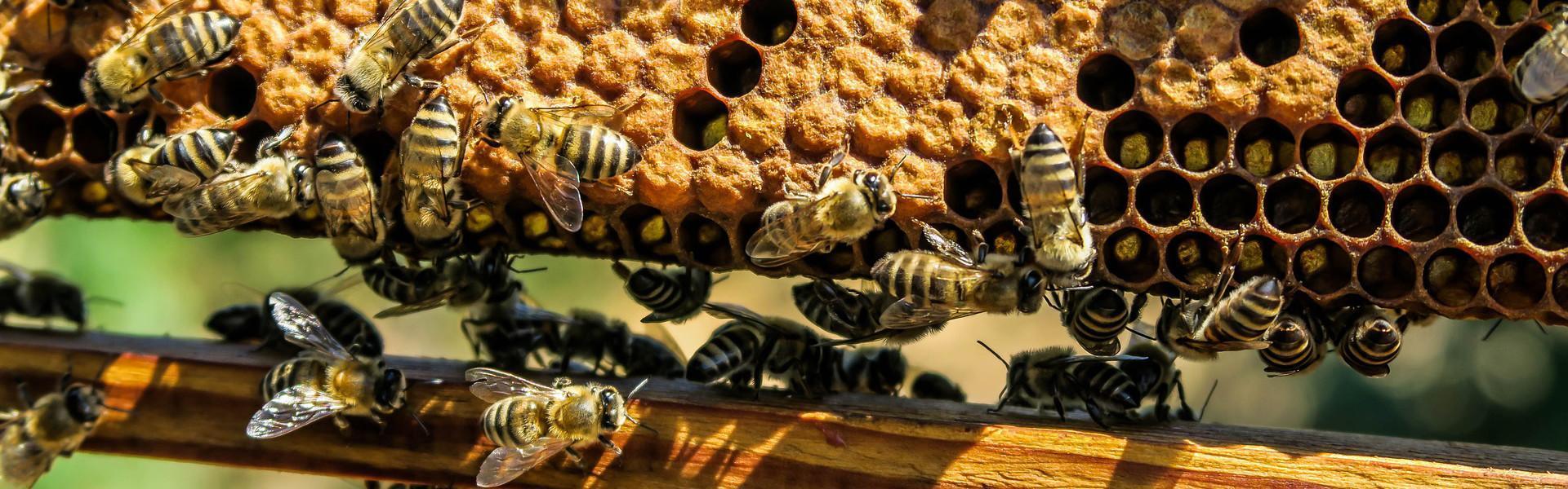Mehiläistarhaajat